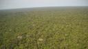 05/09 - Dia da Amazônia