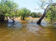 Período de cheia na vegetação de Igapó, banhada pelo rio Tapajós em Alter do Chão/Santarém/PA. Foto: Cecília Carvalho – Julho 2018.